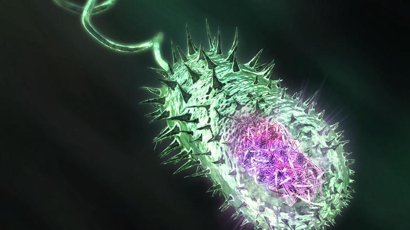 霍乱高发季节,如何预防?