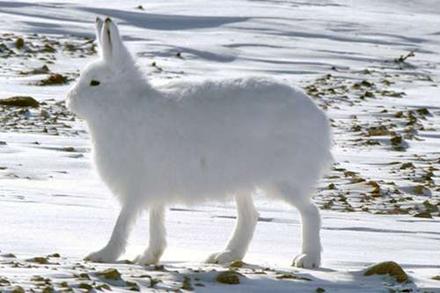 除了北极熊,北极还有哪些生物?
