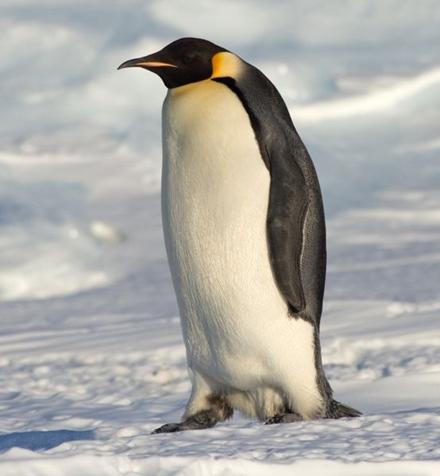企鹅是几级保护动物