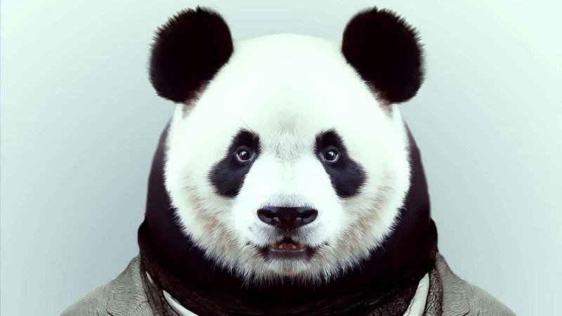 壁纸 大熊猫 动物 800_450