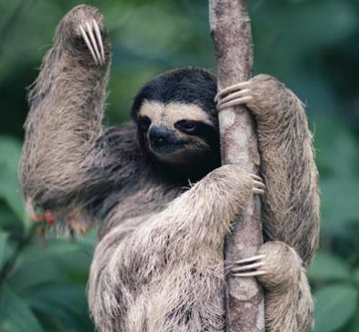 """要想在动物园里找准一只树懒就像寻找""""瓦尔多在哪"""""""