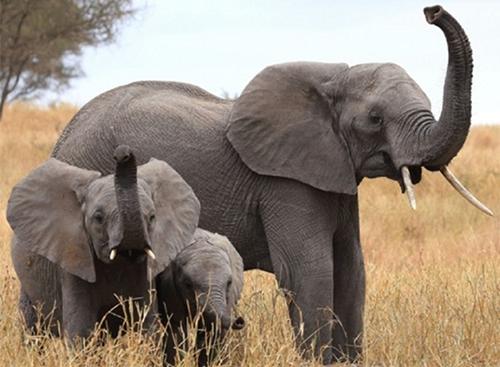 小狗vs大象,谁的鼻子最灵敏?