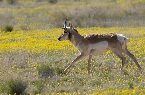 哪种陆栖动物的速度最快?
