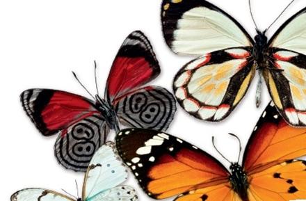 这是蝴蝶通过翅膀上的花纹来模拟动物的眼睛以达到