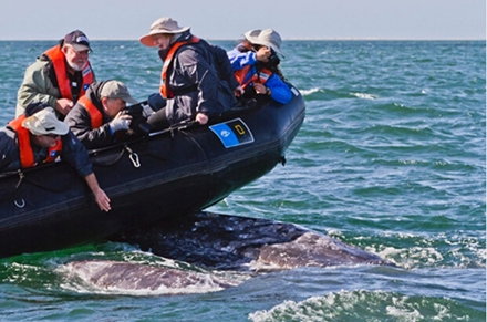 生态旅游危及海洋生物?