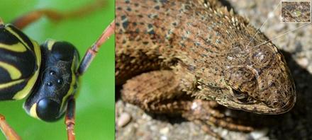 地球上有长三只眼睛的动物吗?