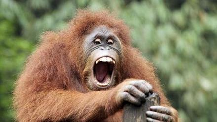 为什么人类不像动物那样一脸毛?