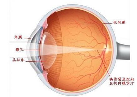 眼球屈光结构示意图