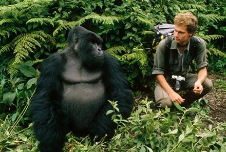 猩猩动物跑步分解图