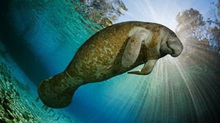 地球上最丑陋的生物是什么 高清图片