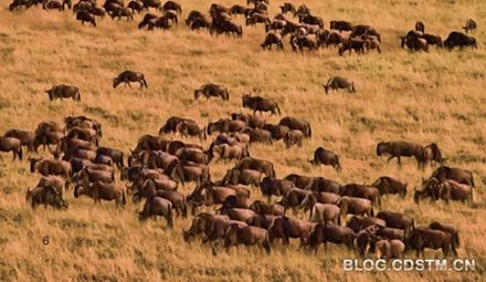 动物的迁徙之路并不甜蜜
