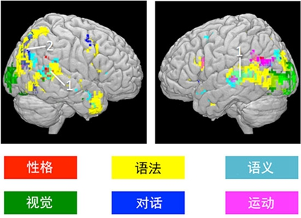 该研究揭示了与特定字词、语法甚至角色相对应的脑部活动(图片来源:卡内基·梅隆大学机器学习系)