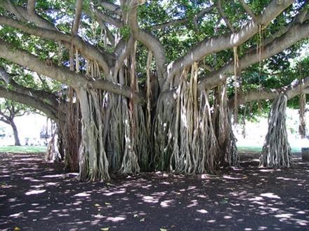 榕树内部的结构是很多种动物的避风港