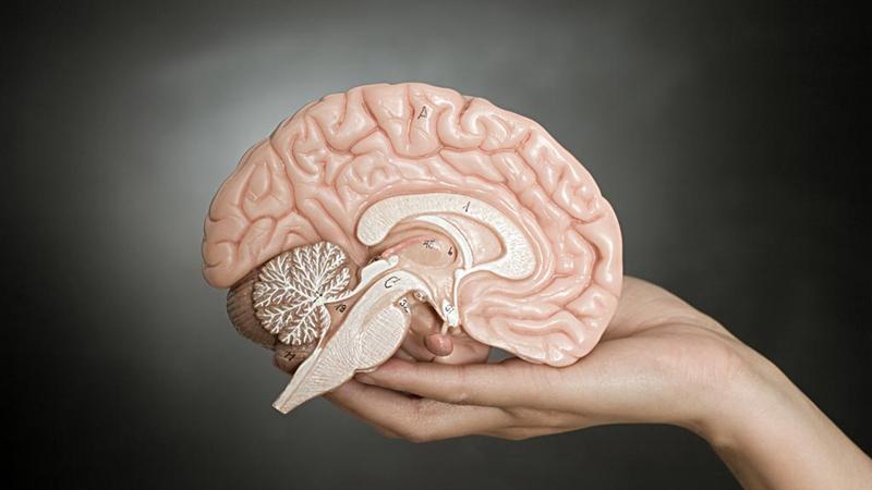 """大脑""""电路"""",男女有何不同?的头图"""