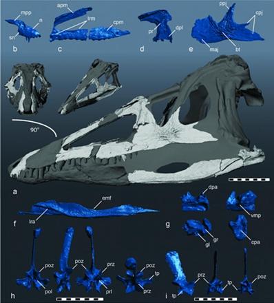 恐龙之前,鳄鱼统治北美? - 如是 - 如是博客