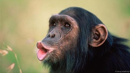 大猩猩咧嘴笑的表情表情包我要抱抱图片