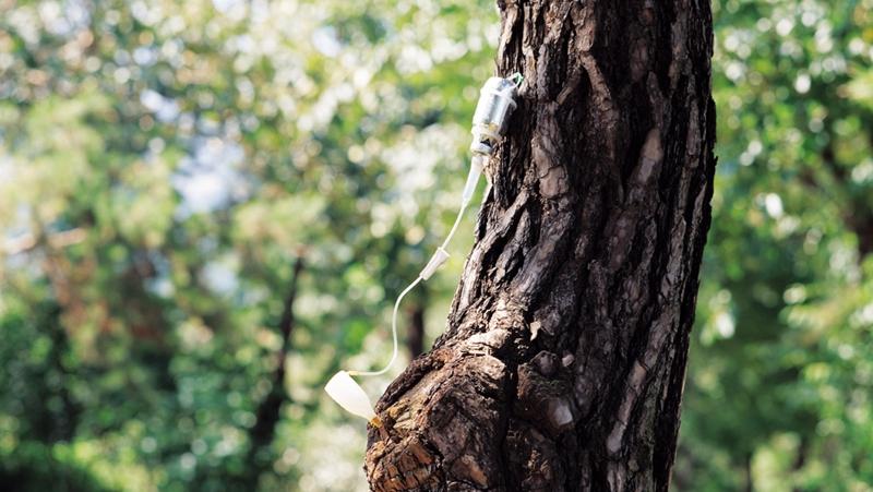 """什么的树木_给树木""""打点滴"""",目的是什么?_fengfeixue0219_知道日报_百度知道"""