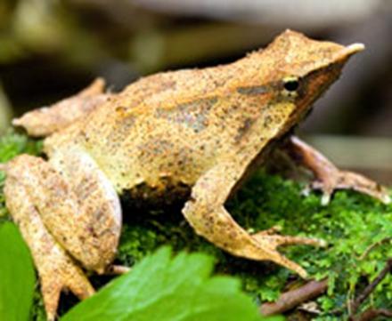 全球大约有7000种青蛙,蟾蜍及火蜥蜴,蚓螈等两栖动物.