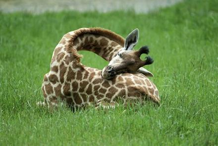 动物都有哪些千奇百怪的睡眠方式?